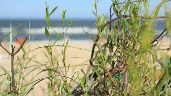 Focusing At Beach Through Bushes