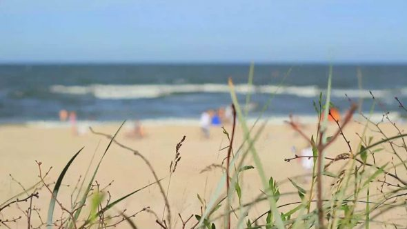Focusing At Beach Life