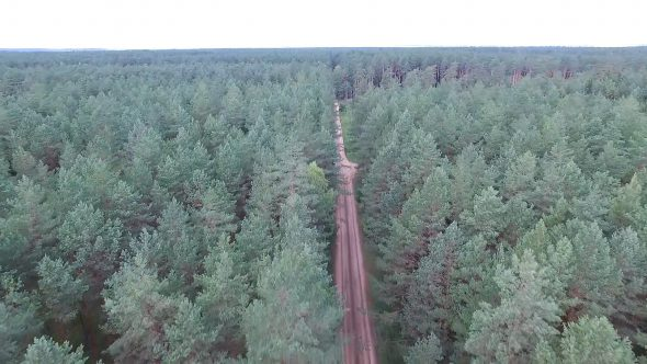 Flight Over The Forest Near Gravel Road, Car Passing By 1