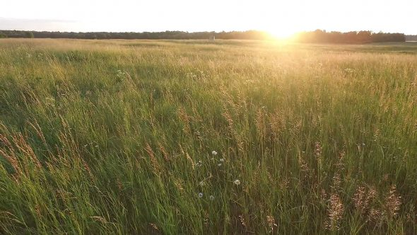 Low View Of Meadow