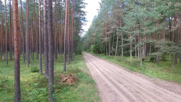 Car Passing By On Gravel Road In Forest 2