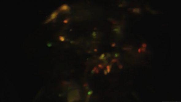 Light Leaks Element 193
